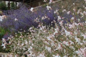 fleurissement Pouzauges
