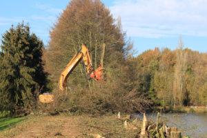 Abattage arbres digue lac de l'espérance