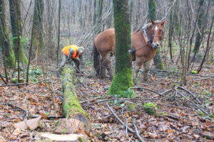 Chevaux Bois de la Folie - Long Crins